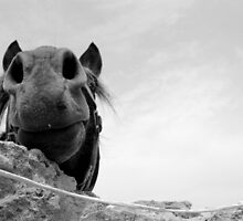 horse up close by Inzaie