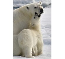 Polar Love Photographic Print