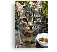 Tabby Cat Kitten Making Eye Contact Canvas Print