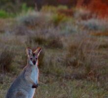 Evening Wallaby  Sticker