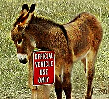 The Official Vehicle by Susan Bergstrom