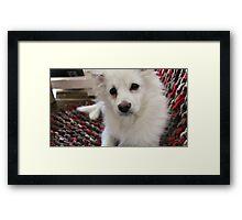 Furry Friend on the Blanket  Framed Print