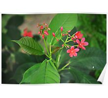 Pink Flowers and buds Poster