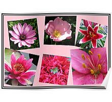 Pink Flowers of Summer Collage Poster
