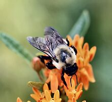 Fuzzy Bumble by Keala