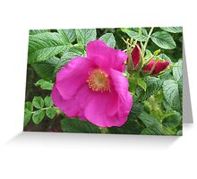 Soft and Gentle - Pink Wild Rose with Buds Greeting Card