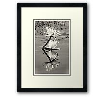African Water Lillys On The Chobe River Framed Print