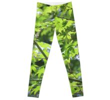 Tree Green Leggings