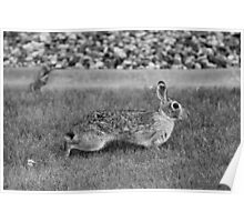 Stretched Bunny! Poster