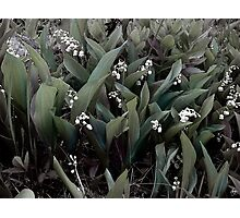 Lilies of the Valley Mindscape No 1 Photographic Print