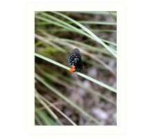Butterfly on Blade of Grass Art Print