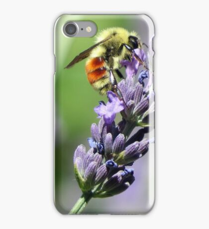 Bumble Bee Orange Black and Yellow iPhone Case/Skin