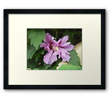 Lilac Flower of China Framed Print