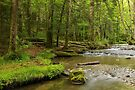 Herisson river in Jura forest by Patrick Morand