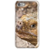 African Spurred Tortoise iPhone Case/Skin