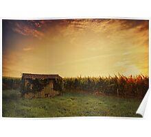 Vineyard Shed Poster