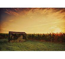 Vineyard Shed Photographic Print