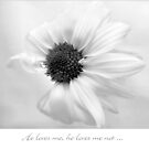 He loves me, he loves me not ... by LouiseK