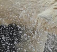 Shaking Off Water Sticker