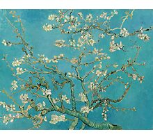 Almond Blossoms Vincent Van Gogh Painting Photographic Print