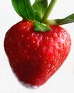 Red Ripe Strawberry by LouiseK