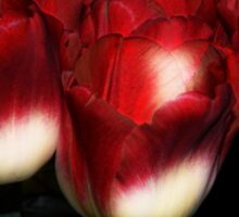 Red And White Tulips Sticker