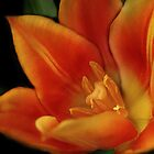 Orange Flower by debsdesigns