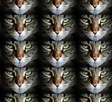The Eye's of a Cat. by Forfarlass