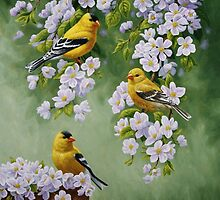 Goldfinches and Blossoms by csforest