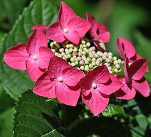 Flower Lips by Archylla