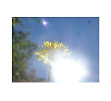 The Year of the Dandelion  by Pascale-Cheron