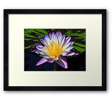 Beautiful Water Lily and Lily Pad Framed Print