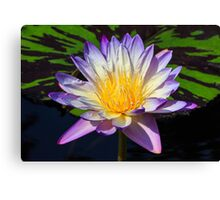 Beautiful Water Lily and Lily Pad Canvas Print