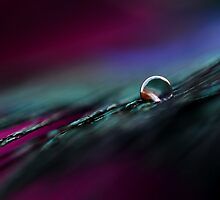 Rainbow Drop on Feather by Dax- FineART