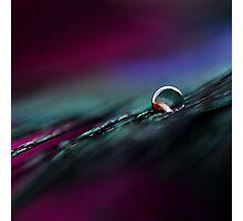 Rainbow Drop on Feather Photographic Print