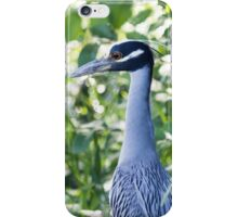 Yellow crown night heron iPhone Case/Skin