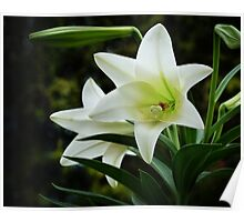 Easter Lilies Poster