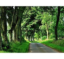 A Scottish summer lane Photographic Print