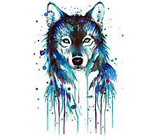Blue Wolf Photographic Print