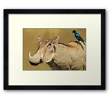 Hitching a Ride - Warthog and Starling - Wild Africa Framed Print