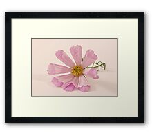 Pink Cosmo - Sea Shell Macro Framed Print