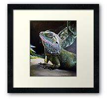 The Cameleon Watches  Framed Print