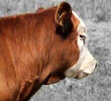 A Contemptuous Cow by AuntDot