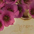 Bergenia Macro by Sandra Foster