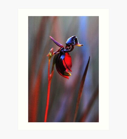 Flying Duck Orchid Art Print