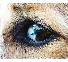 The World in Your Eyes Photographic Print