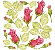 pattern with roses Photographic Print