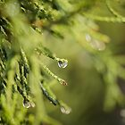 Morning Dew  by Nicole  Markmann Nelson
