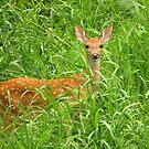 Babe in Tall Grass by lorilee