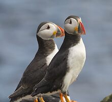 Mr & Mrs Puffin by M.S. Photography & Art